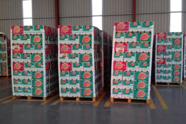 Freshgro   South Africa Citrus Growers   Citrus Fruit Exporters
